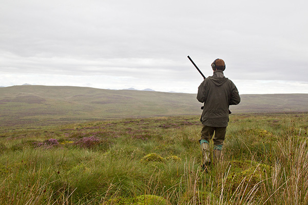 a man with shotgun in hand walks across a grouse moor