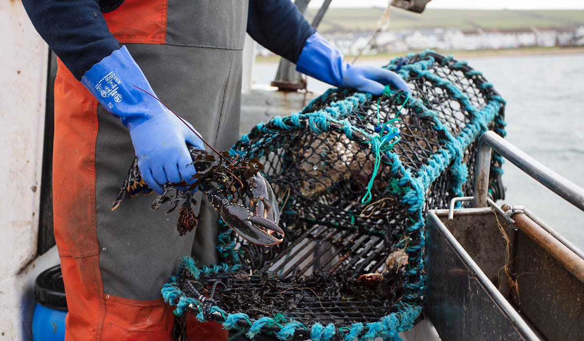 A fisherman taking a lobster out of a pot on a fishing boat